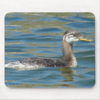 B0040 Juvenile Red-necked Grebe Mouse Pad