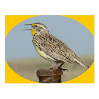 B0042 Western Meadowlark Postcard