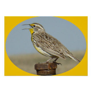 B0042 Western Meadowlark Poster