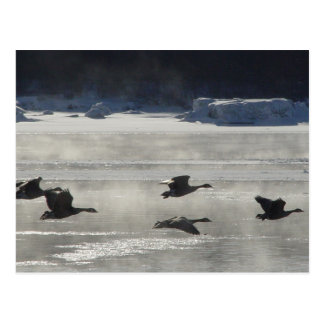 B0047 Canadian Geese Over Frozen River Postcard