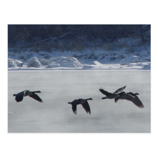 B0048 Canadian Geese Over Frozen River Postcards