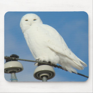 B0050 Snowy Owl Mouse Pad