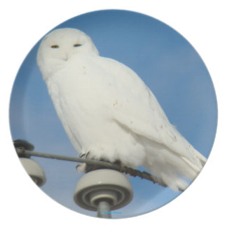 B0050 Snowy Owl Party Plates