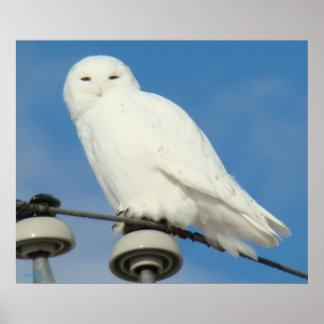 B0050 Snowy Owl Poster