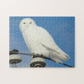 B0050 Snowy Owl Jigsaw Puzzles
