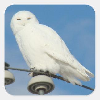 B0050 Snowy Owl Square Sticker