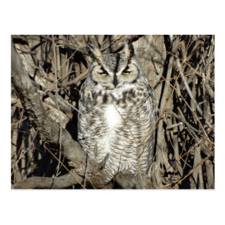 B0051 Great Horned Owl Postcard
