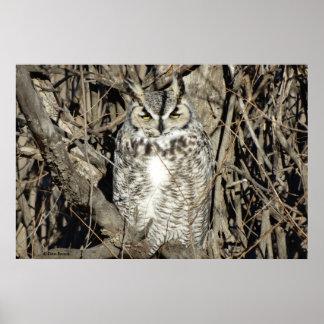 B0051 Great Horned Owl Poster
