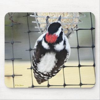 B0053 Downy Woodpecker Mouse Pad