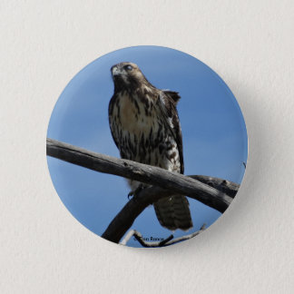 B0054 Swainsons Hawk Button