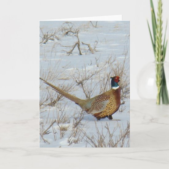 B22 Ring-necked Pheasant Card