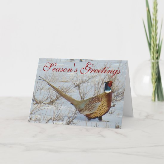 B22 Ring-necked Pheasant Holiday Card