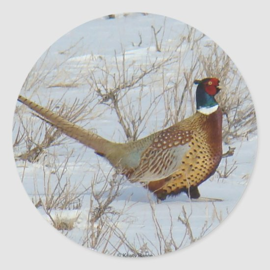 B22 Ring-necked Pheasant in Snow Classic Round Sticker