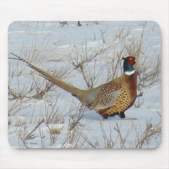 B22 Ring-necked Pheasant in Snow Mouse Pad