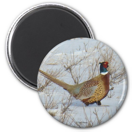 B22 Ring-necked Pheasant Magnet