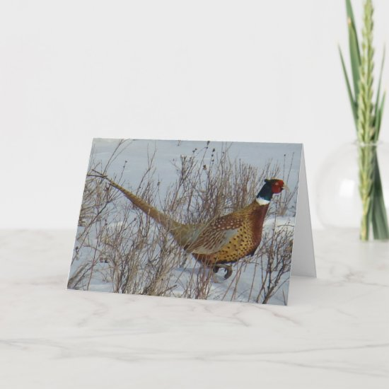 B23 Ring-necked Pheasant Card