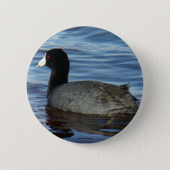 B27 Common Coot Pinback Button