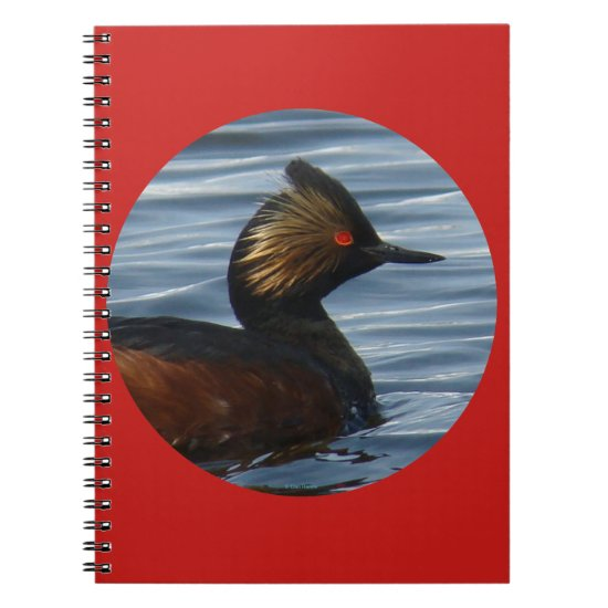 B41 Eared Grebe Notebook