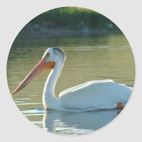 B4 White Pelican Classic Round Sticker