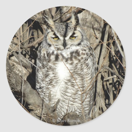 B51 Great Horned Owl Classic Round Sticker