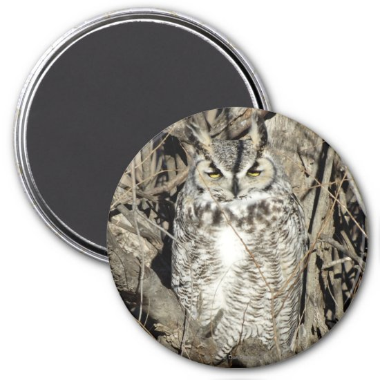 B51 Great Horned Owl Magnet