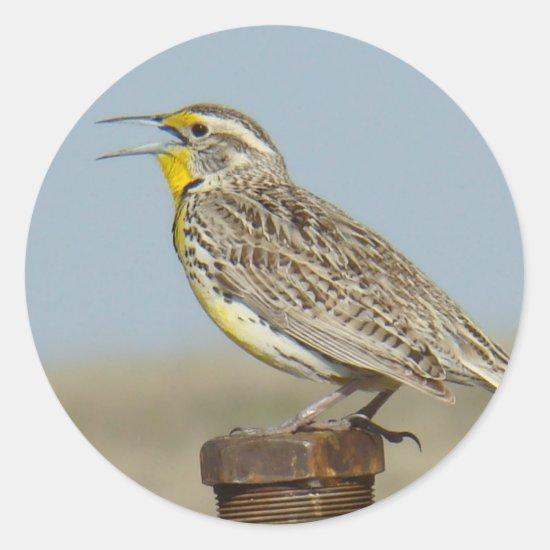 B6 Western Meadowlark Classic Round Sticker