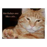 B-days are like cats greeting card