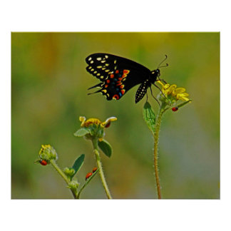 B-Fly the Ladybugs Print
