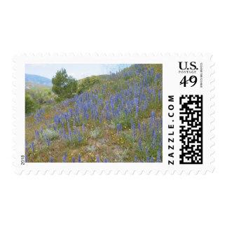 B Spring Lndscp Postage