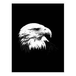 B&W American Bald Eagle Postcard
