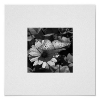 B&W Butterfly & Daisy on White Poster