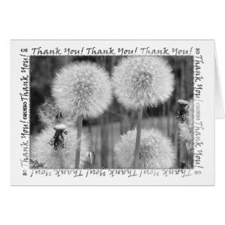 B&W Dandelions Thank You Card