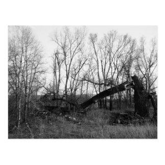 B&W - Dead & Broken Tree In A Field Postcard