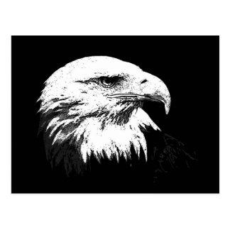 B&W Eagle calvo americano Tarjetas Postales