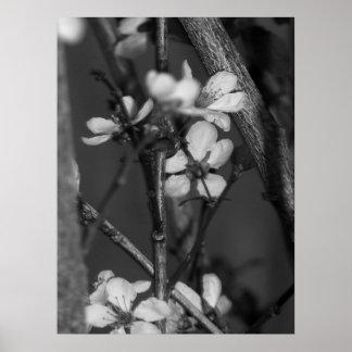 B&W floral - flores delicadas 2 Póster