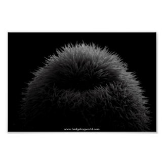 b&w hedgehog poster