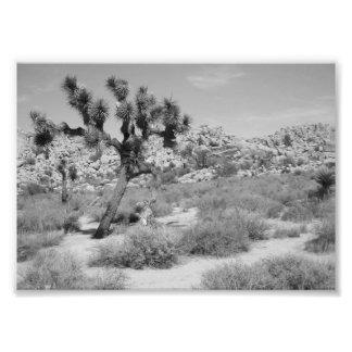 B&W Joshua Tree National Park 3 Photo Print