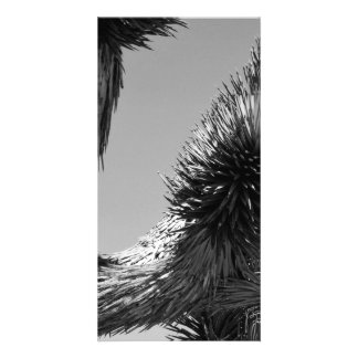 B&W Joshua Tree National Park 4 Card
