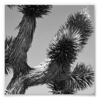 B&W Joshua Tree National Park 4 Photo Print