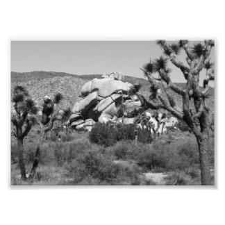 B&W Joshua Tree National Park 5 Photo Print