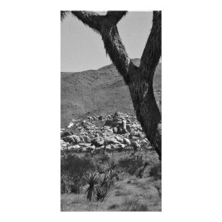 B&W Joshua Tree National Park 6 Card