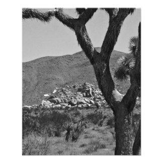 B&W Joshua Tree National Park 6 Flyer