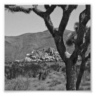 B&W Joshua Tree National Park 6 Photo Print
