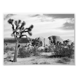B&W Joshua Tree National Park Photo Print