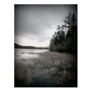 B&W Lake Marsh Landscape Post Cards