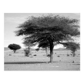 B&W Marocco desert Postcard