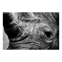 B&W Rhino Poster