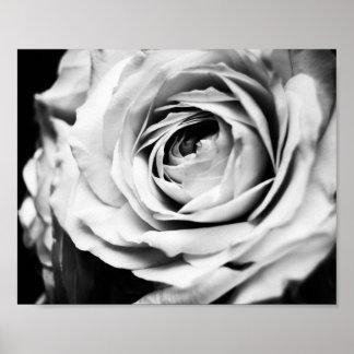 B&W Rose Sharpened Poster