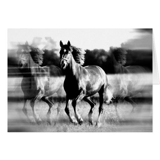 B&W Running Horse Greeting Card