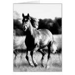B&W Running Horse Greeting Cards